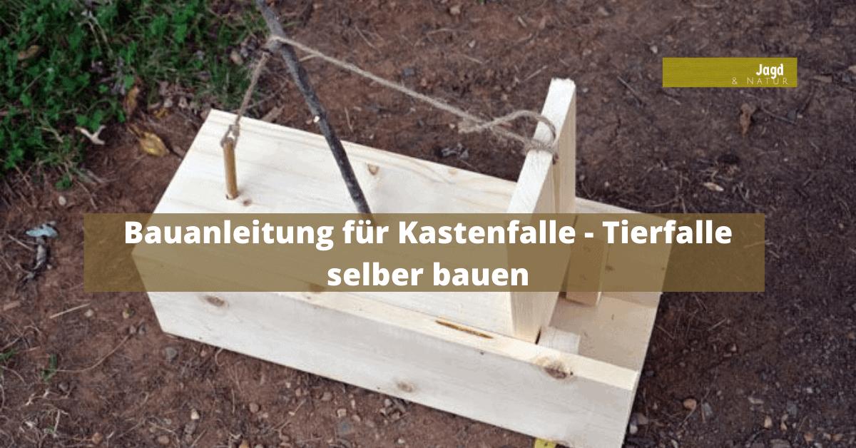 Hackklotz Selber Bauen : bauanleitung f r kastenfalle tierfalle selber bauen ~ Watch28wear.com Haus und Dekorationen