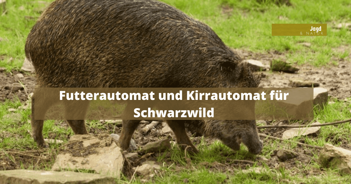 Futterautomat und Kirrautomat für Schwarzwild