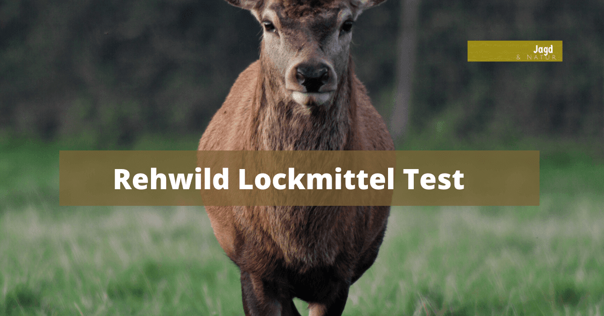 Rehwild Lockmittel Test
