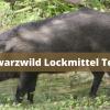 Schwarzwild Lockmittel Test