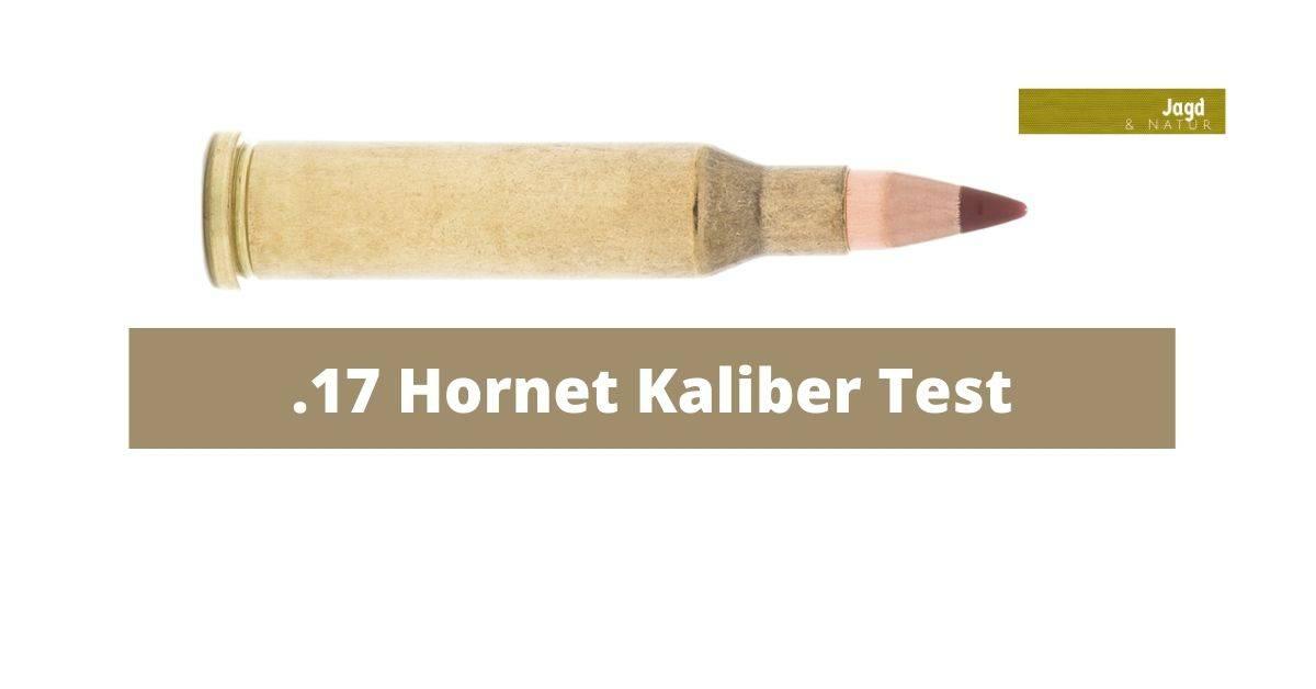 17 Hornet Kaliber Test